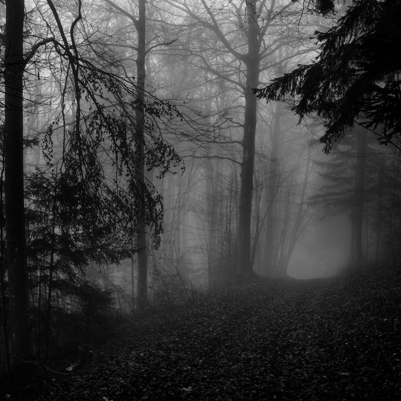 Dark forest II