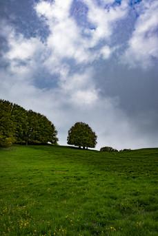 Green wanderin