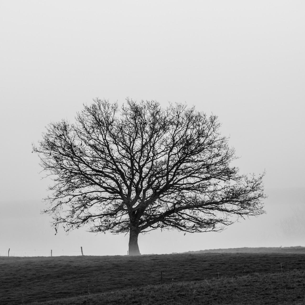 Lonely tree IV