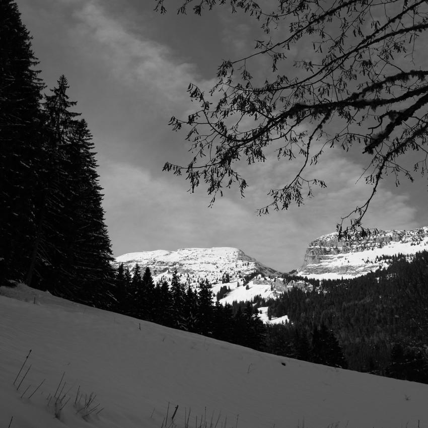 Mountain view IV