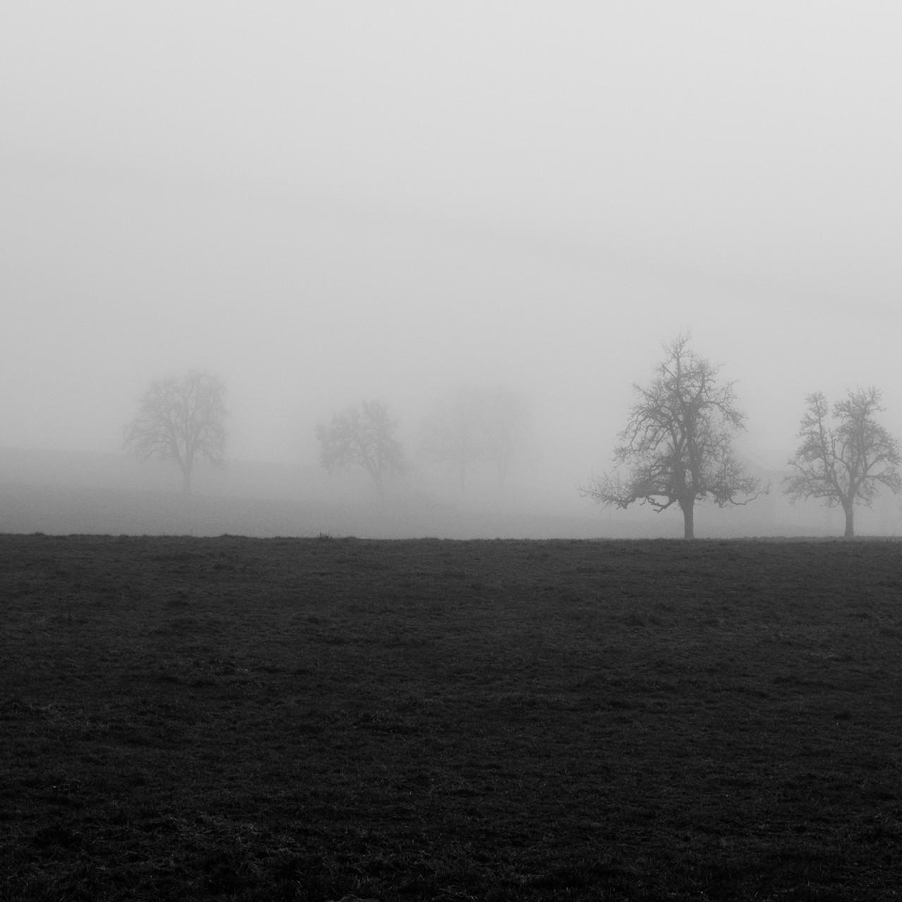 Foggy Trees III