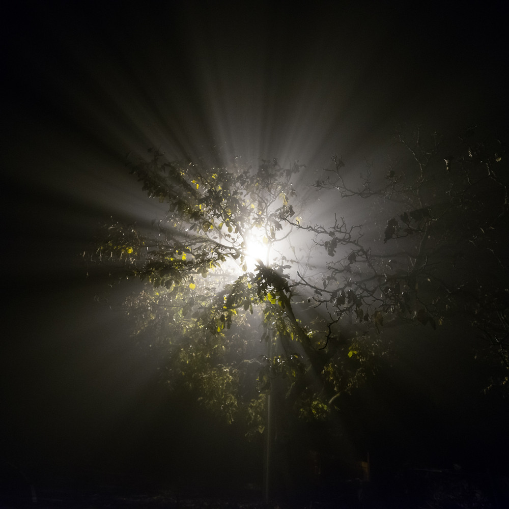 Foggy Night-7.jpg