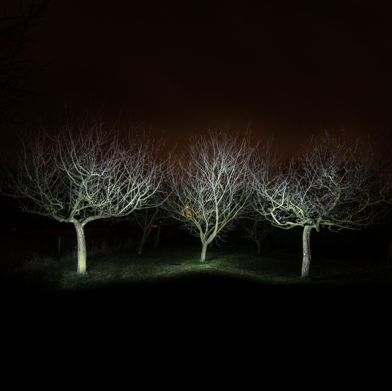 Ghost Trees I