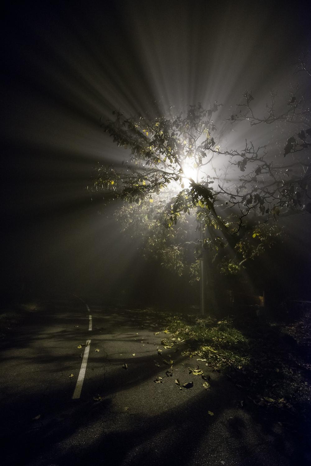 Foggy Night-8.jpg
