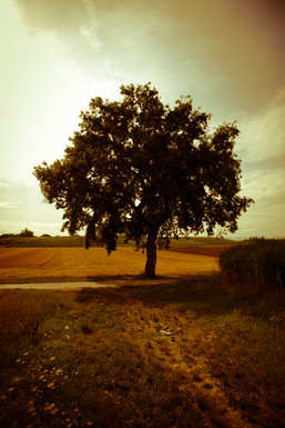 Cyan tree