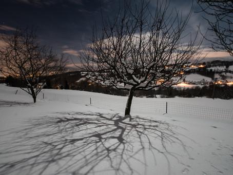 Icy Nights
