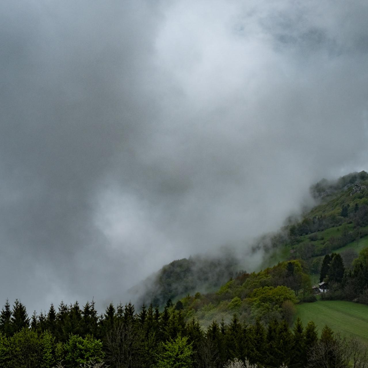Foggy trees II