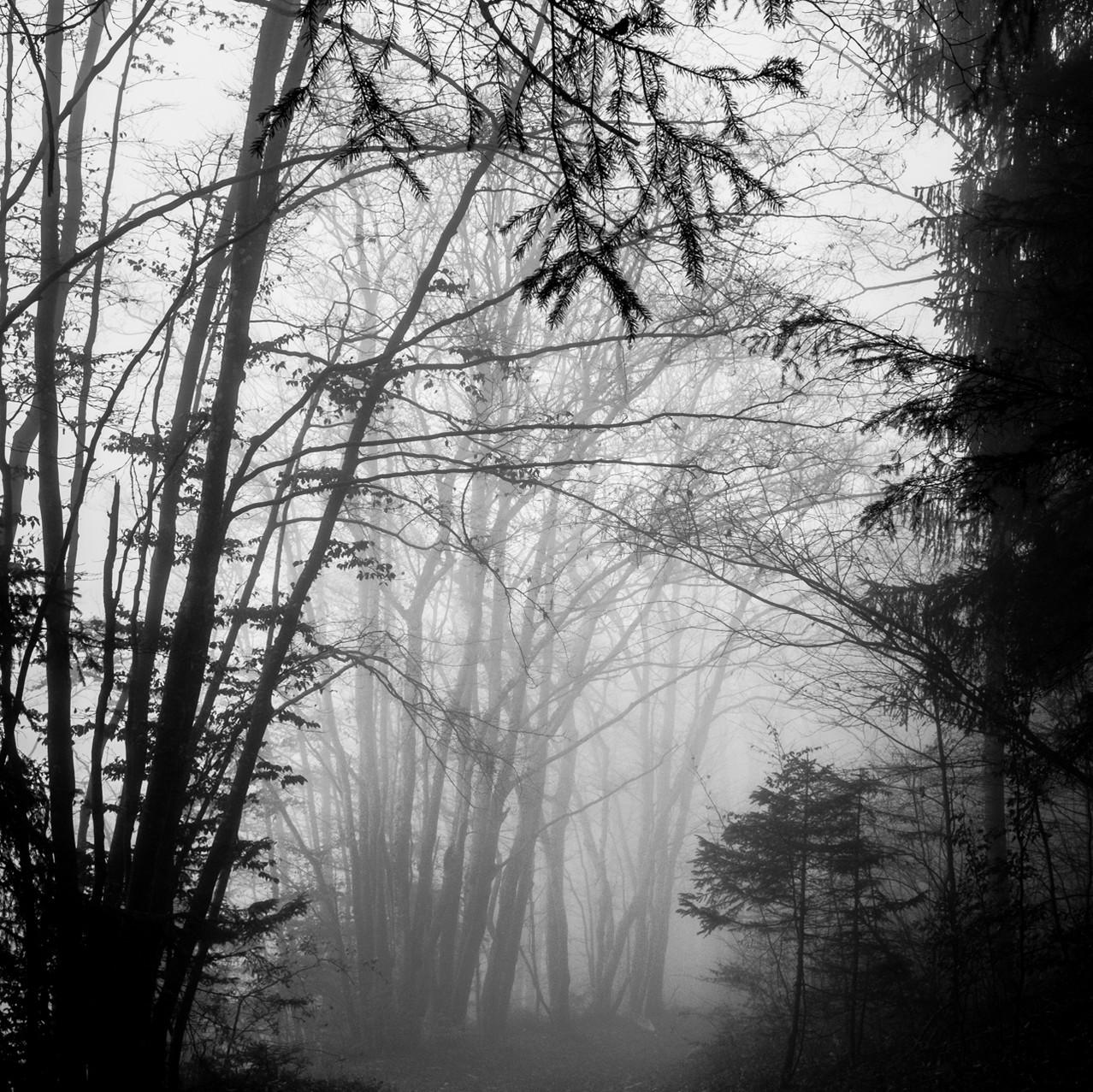 Dark forest III