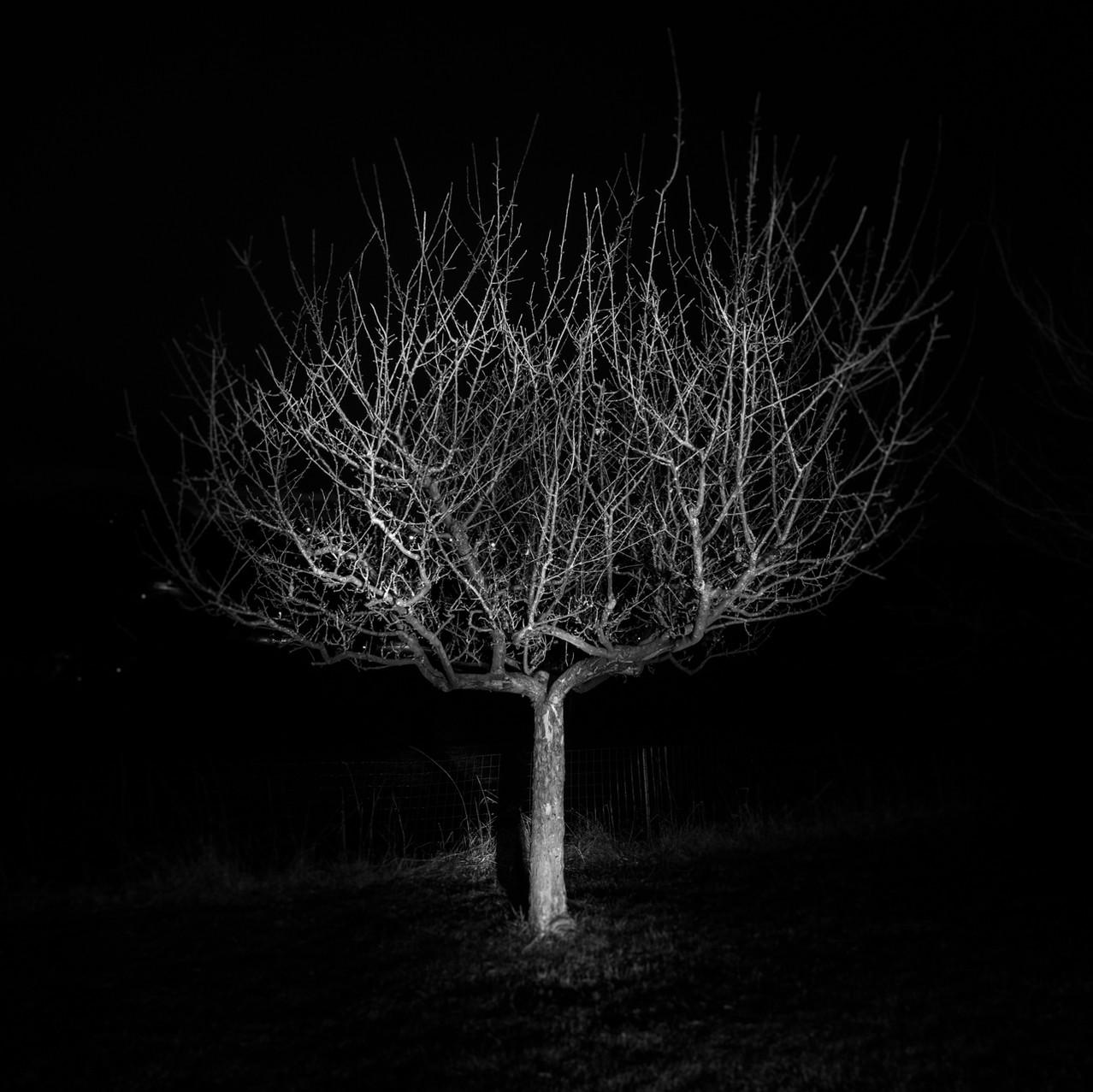 Ghost Trees III