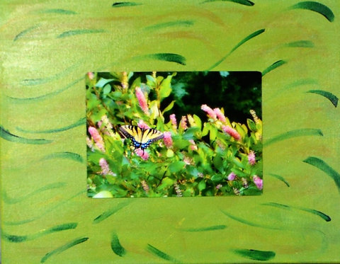 Swallowtail Butterfly on Canvas