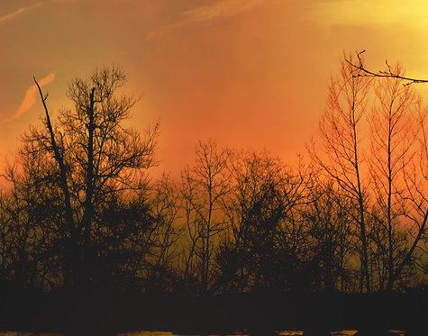Morning Forest I