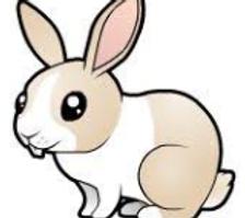tavşansymbol.png
