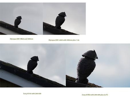 COMPARISON BETWEEN OLYMPUS 300MM PLUS 1.4 TC AND SONY 200-600MM PLUS 2.0TC