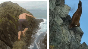 Now we are the Walrus on the cliff.