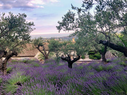rentals management lavender France