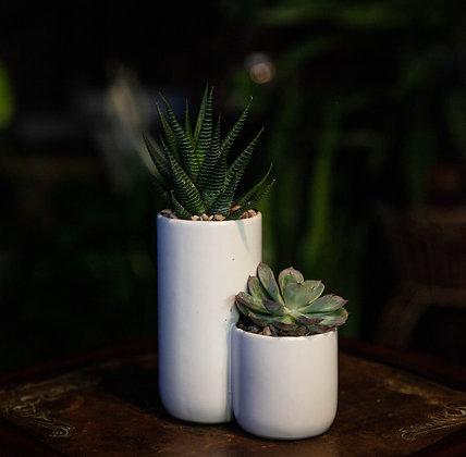 2-Tier Succulent Pot