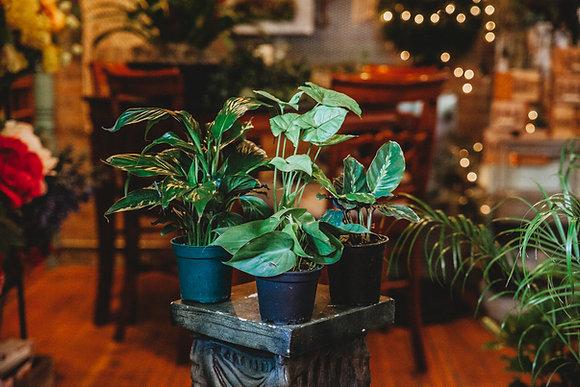 "4"" Starter Plants (Assorted)"