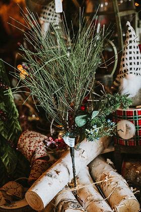Pine, Spruce, & Juniper Picks