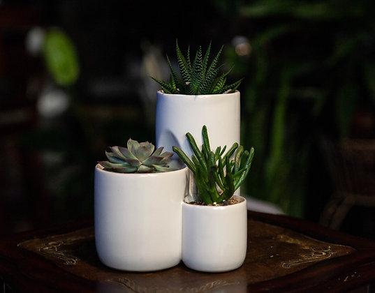 3-Tier Succulent Pot