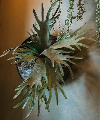 Artificial Staghorn Fern