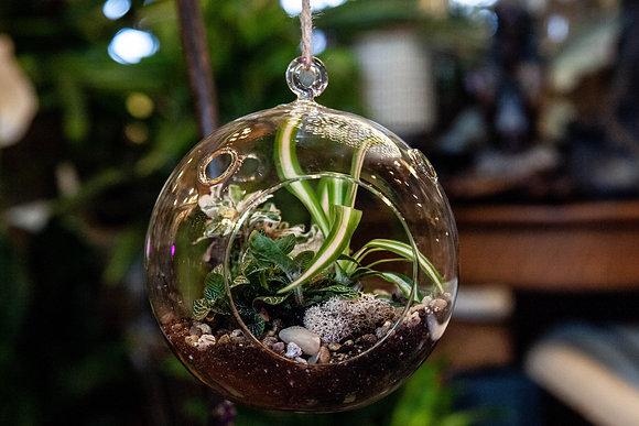 Tessa-rariums - Globe