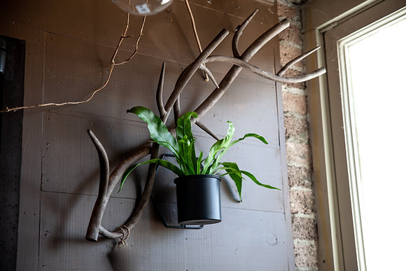 Twisted Branch Wall Decor