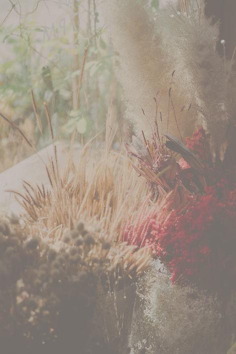 pexels-amina-filkins-5409660_edited.jpg