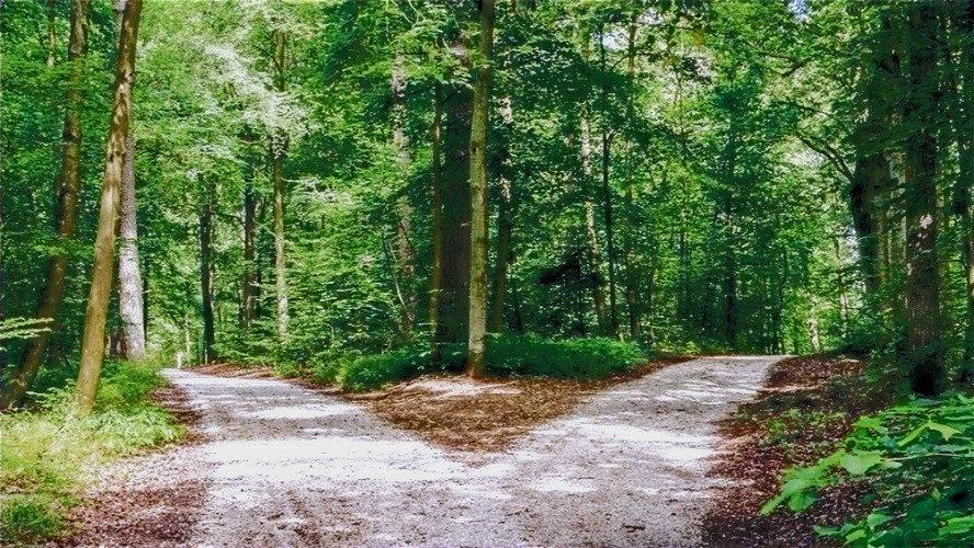Tree%252525252520pic_edited_edited_edited_edited_edited_edited_edited.jpg
