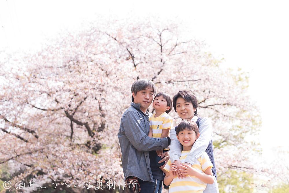 桜・ファミリーフォト