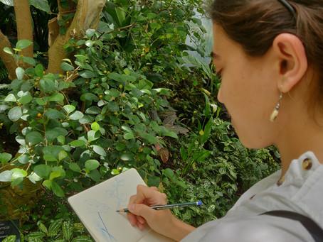 Plein-Air Sketching at Allan Gardens