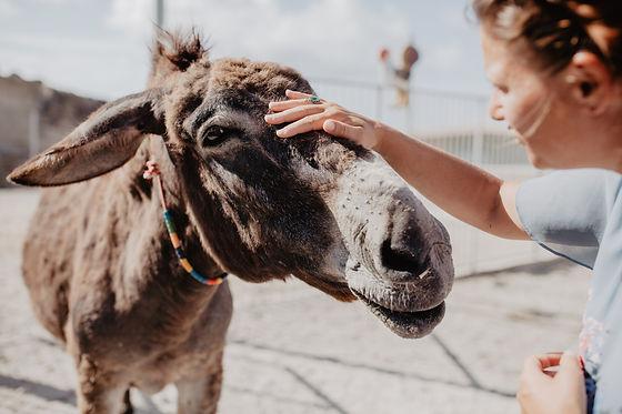 Donkey Santorini