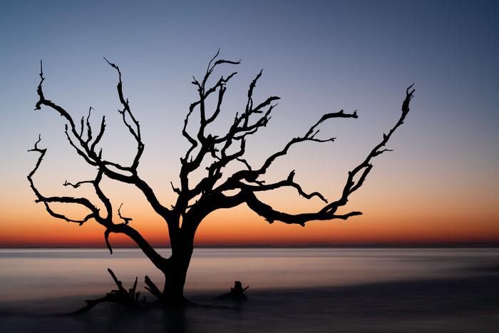 Driftwood Beach 02