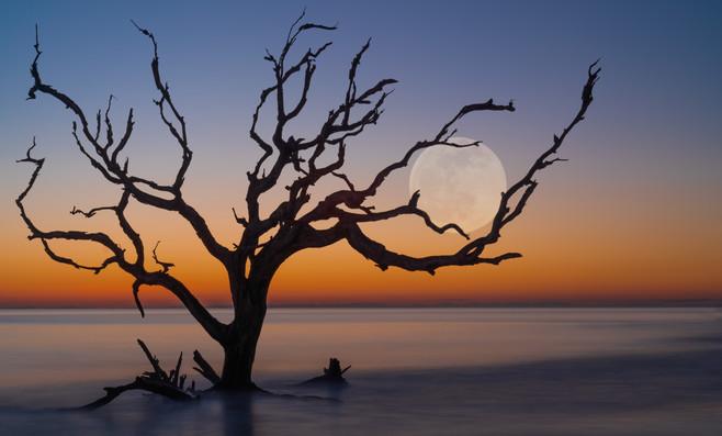 Driftwood Beach-4.jpg
