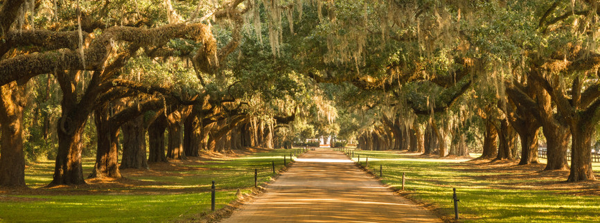 Charleston Oaks-1.jpg