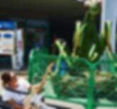 gye aruta mantis
