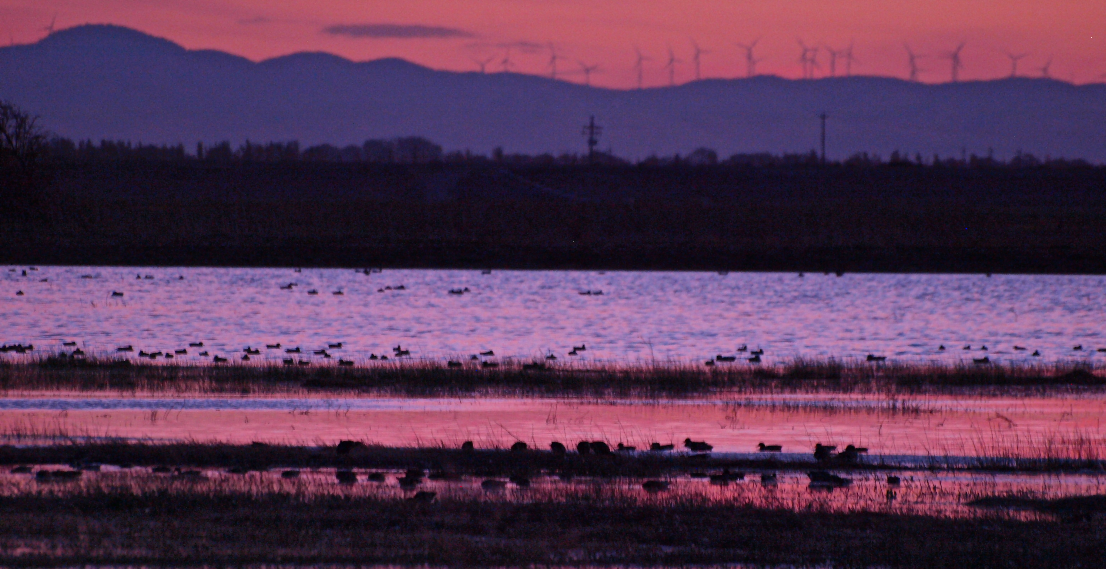 Evening with the Sandhill Cranes