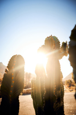 Kaktus flares mood
