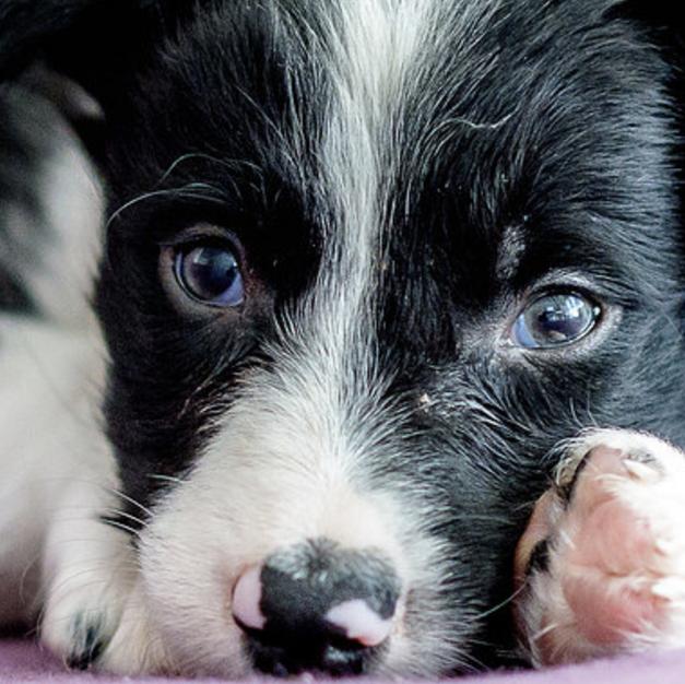 Doggie Bark Box Website