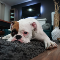 Things to Consider for Pet-Friendly Rentals