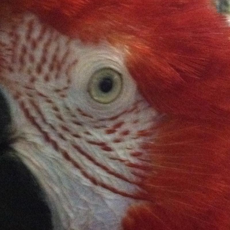Parrot Adoption Education Program