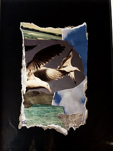 estuary_gulls_1_by_zoehowecollages-dbj6s
