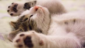Word of the week: für die Katz sein