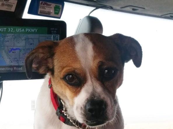 Bailey truck dog_edited.jpg
