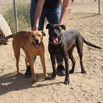 Lola and Charlie