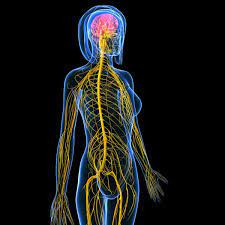 Recovery of the nervous system (Part 4 of 4)