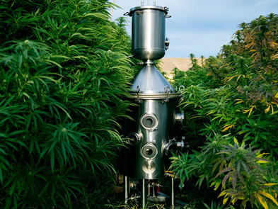 Cannabis extractions methods, what consumers should know