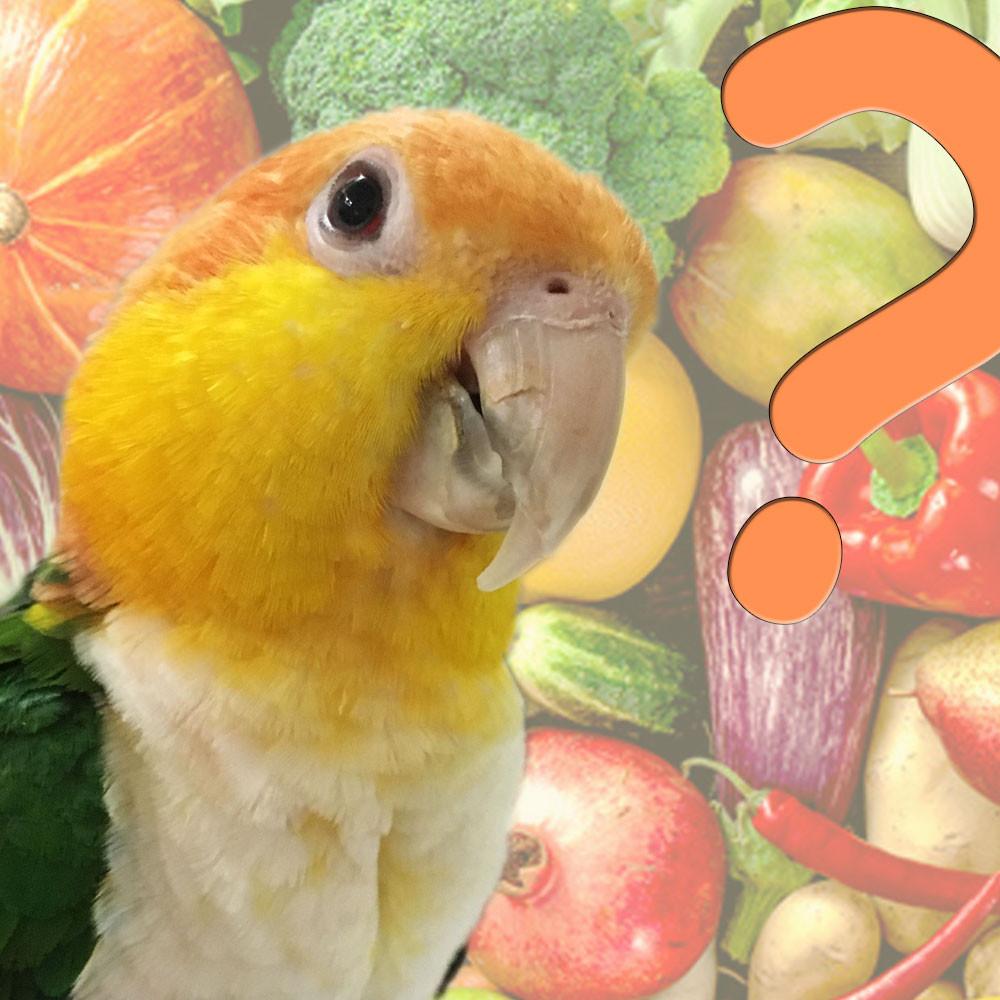 Rostkappenpapagei Fragen und Antworten Haltung Ernährung Papagei Liveparrot