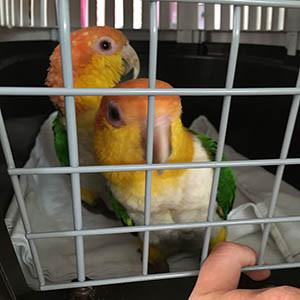 Tagebuch: Meine Papageien waren krank