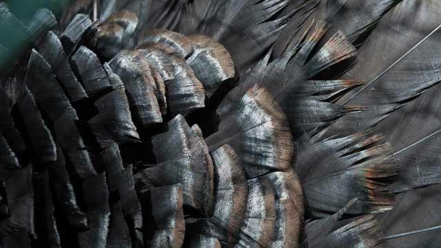 Federn Vogel Knochen Fliegen Papagei Blog Rostkappenpapagei Liveparrot