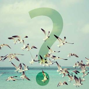 Warum kann ein Vogel fliegen?